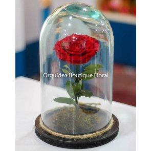 Rosa Eterna Grande